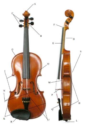 小提琴的解剖